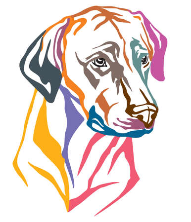 Colorful decorative portrait of Dog Rhodesian Ridgeback, vector illustration in different colors isolated on white background. Image for design and tattoo.