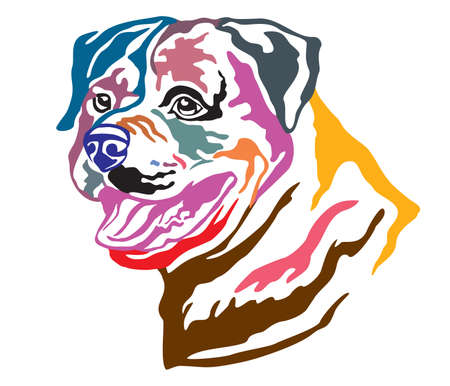 Colorful decorative portrait of Dog Rottweiler, vector illustration in different colors isolated on white background. Image for design and tattoo. Illustration