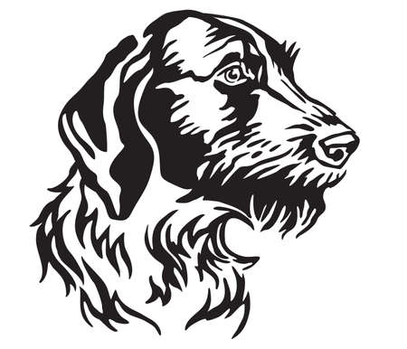 Decorative portrait of Dog German Wirehaired Pointer, vector isolated illustration in black color on white background. Image for design and tattoo.