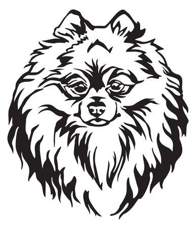 Decorative portrait of Dog Pomeranian Spitz, vector isolated illustration in black color on white background. Image for design and tattoo.