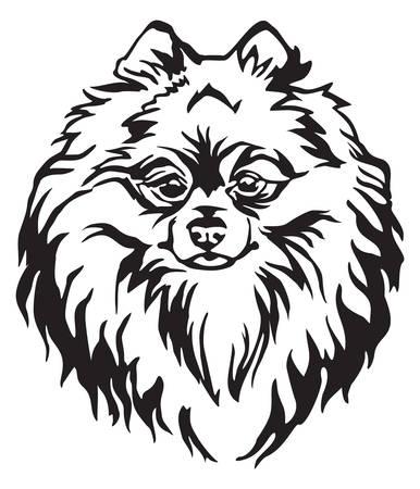 Retrato decorativo de perro Pomeranian Spitz, vector ilustración aislada en color negro sobre fondo blanco. Imagen para diseño y tatuaje. Ilustración de vector