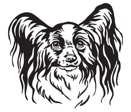 Decorative portrait of Papillon Dog, vector isolated illustration in black color on white background. Image for design and tattoo.