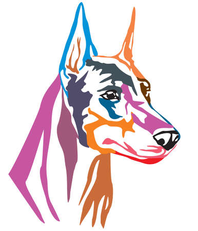 Colorful decorative portrait of Dog Dobermann, vector illustration in different colors isolated on white background. Image for design and tattoo. Illustration