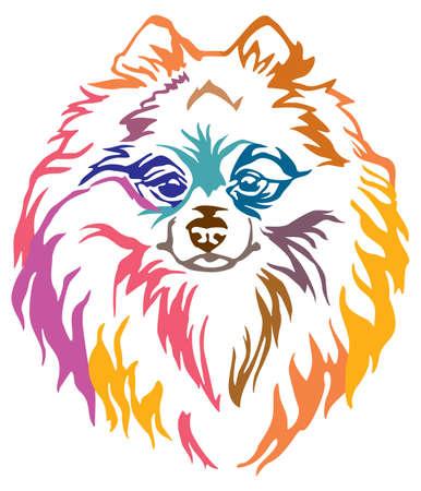 Colorido retrato decorativo de perro Pomeranian Spitz, ilustración vectorial en diferentes colores aislado sobre fondo blanco. Imagen para diseño y tatuaje.