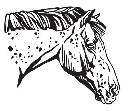 Decorative portrait in profile of Appaloosa horse, vector isolated illustration in black color on white background. Image for design and tattoo.