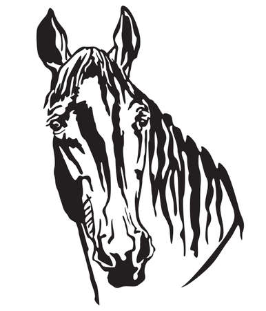 Decorative portrait of Trakehner horse, vector isolated illustration in black color on white background. Image for design and tattoo.