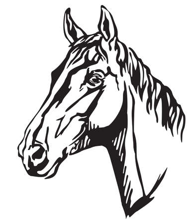 Decorative portrait in profile of beautiful Trakehner horse, vector isolated illustration in black color on white background. Image for design and tattoo.