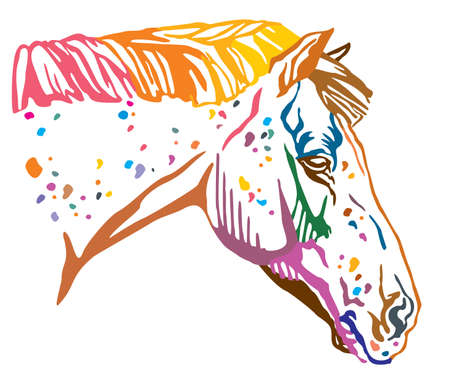 Colorful decorative portrait of spotted Appaloosa horse, vector illustration in different colors isolated on white background. Image for design and tattoo.