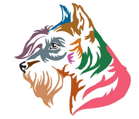 Colorful decorative portrait in profile of Dog Miniature Schnauzer, vector illustration in different colors isolated on white background. Image for design and tattoo.