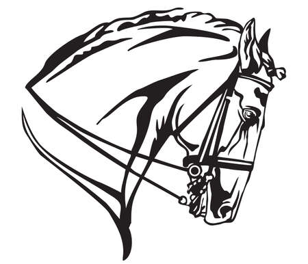 Decorative portrait in profile of Andalusian horse with bridle, vector isolated illustration in black color on white background. Image for design and tattoo.