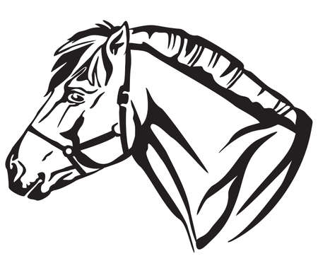Decorative portrait in profile of Norwegian fjord pony, vector isolated illustration in black color on white background. Image for design and tattoo. Imagens - 104186334