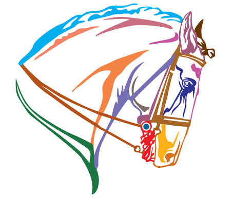 Colorful decorative portrait in profile of Andalusian horse with bridle, vector illustration in different colors isolated on white background. Image for design and tattoo.