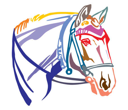 Colorful decorative portrait in profile of horse with beautiful bridle, vector illustration in different colors isolated on white background. Image for design and tattoo. Illustration
