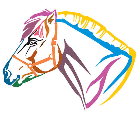 Colorful decorative portrait in profile of Norwegian fjord pony, vector illustration in different colors isolated on white background. Image for design and tattoo.