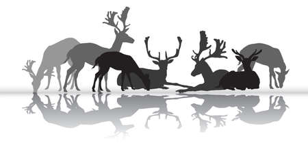 Group of black and grey isolated silhouettes of deers (male an female red deer) standing and lying with reflection isolated on white background. Vector illustration.