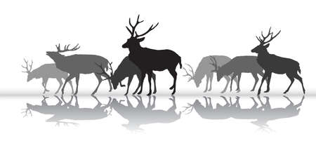 Group of black and grey isolated silhouettes of walking male deers (red deer) with reflection isolated on white background. Vector illustration.