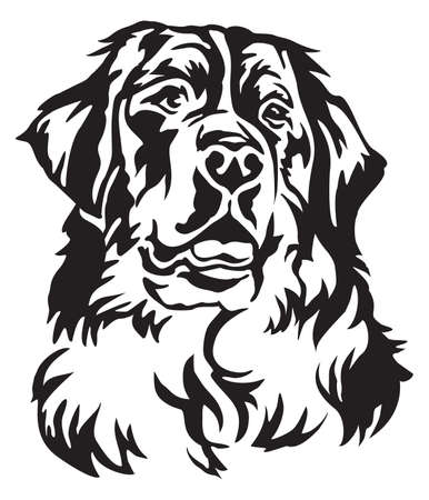 Decorative portrait of Bernese Mountain Dog, vector isolated illustration in black color on white background