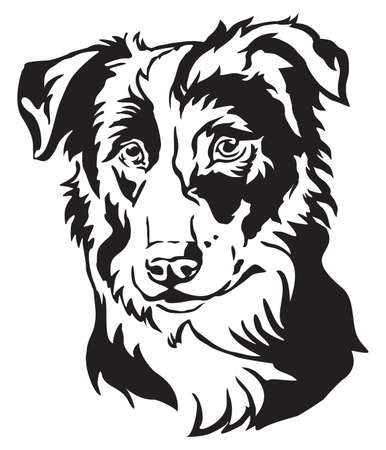 Decorative portrait of dog Border Collie, vector isolated illustration in black color on white background Çizim