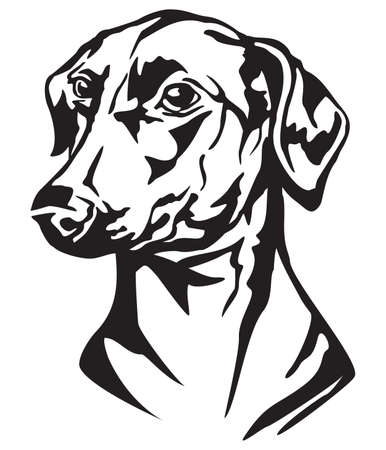Decorative portrait of dog German Pinscher, vector isolated illustration in black color on white background Banco de Imagens - 114877287