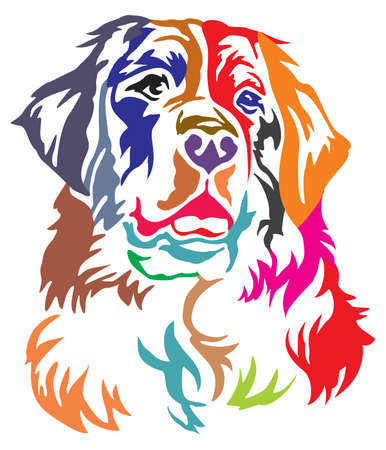 Colorful decorative portrait of Bernese Mountain Dog, vector illustration in different colors isolated on white background