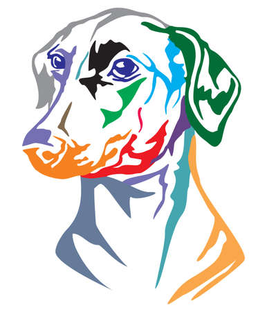 Colorful decorative portrait of dog German Pinscher, vector illustration in different colors isolated on white background
