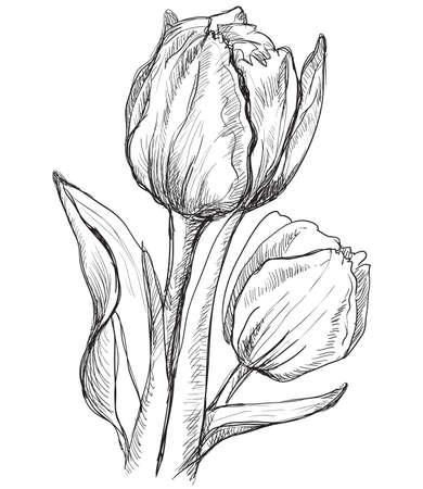 手描きチューリップの花。白い背景に分離されたベクターモノクロイラスト。