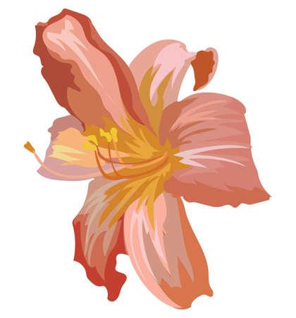 Lilium flower. Vector colorful illustration isolated on white background. Ilustracja