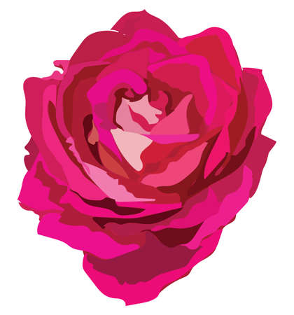 Rose flower. Vector colorful illustration isolated on white background.