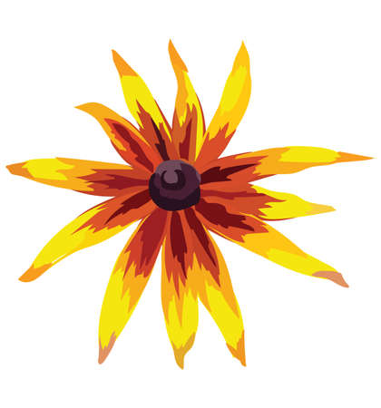 Rudbeckia flower. Vector colorful illustration isolated on white background.