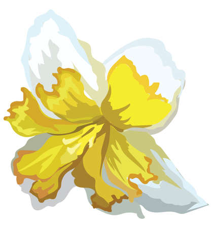 Narcissus flower. Vector colorful illustration isolated on white background. 스톡 콘텐츠 - 112307270