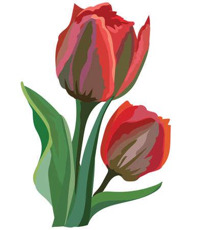 Flor de tulipán. Vector ilustración colorida aislado sobre fondo blanco. Ilustración de vector