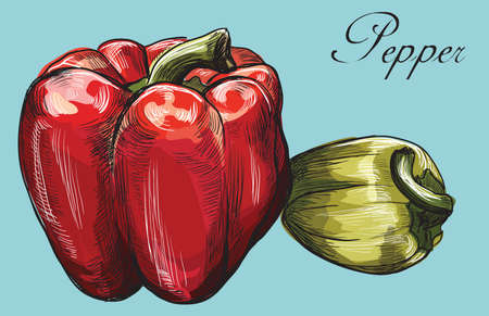 Hand drawn vegetable- peppers red and green. Vector colorful illustration isolated on blue background.