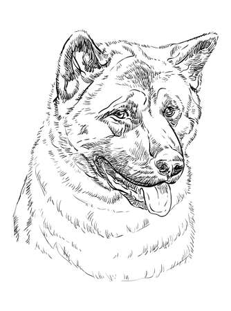 American akita vector hand drawing illustration in black color isolated on white background