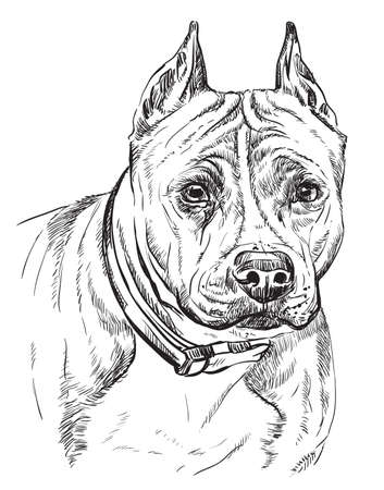 American Staffordshire Terrier vector hand drawing illustration in black color isolated on white background Foto de archivo - 110042090