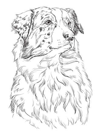 Australian shepherd vector hand drawing illustration in black color isolated on white background