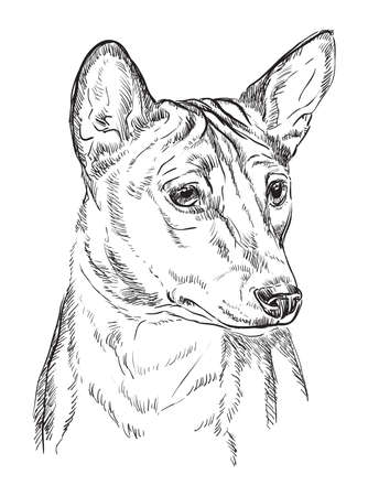 Basenji vector hand drawing illustration in black color isolated on white background