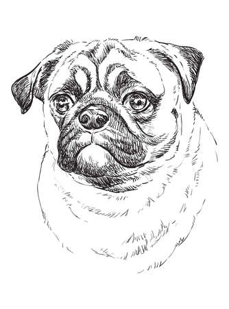 Pug vector hand drawing illustration in black color isolated on white background Ilustração