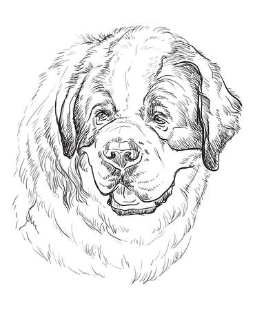 St. Bernard dog vector hand drawing illustration in black color isolated on white background Foto de archivo - 110042094