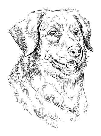 Nova Scotia Duck Tolling Retriever vector hand drawing illustration in black color isolated on white background Illustration
