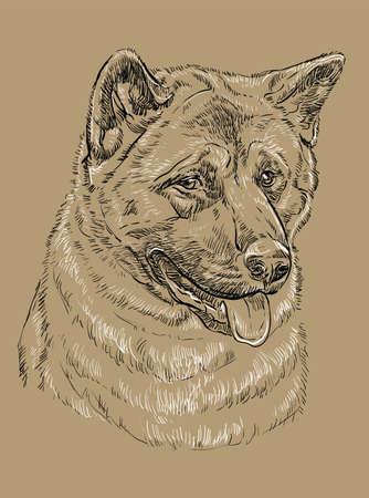 American akita vector hand drawing black and white illustration isolated on beige background Illusztráció