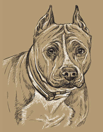 American Staffordshire Terrier vector hand drawing black and white illustration isolated on beige background Illusztráció
