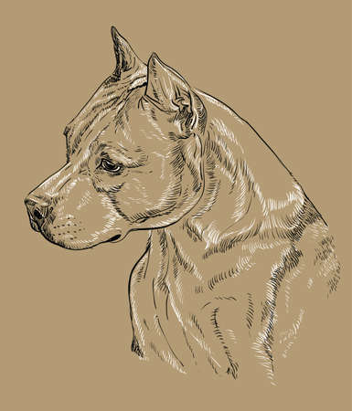 American Staffordshire Terrier vector hand drawing black and white illustration isolated on beige background Çizim