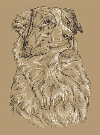 Australian shepherd vector hand drawing black and white illustration isolated on beige background Stock Illustratie