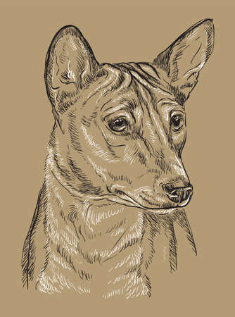 Basenji vector hand drawing black and white illustration isolated on beige background
