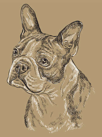 Boston terrier vector hand drawing black and white illustration isolated on beige background Çizim
