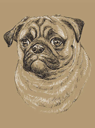 Pug vector hand drawing black and white illustration isolated on beige background