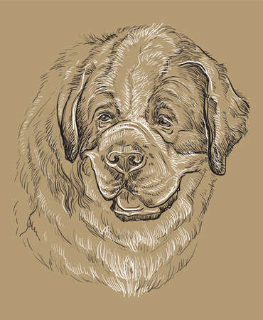 St. Bernard vector hand drawing black and white illustration isolated on beige background Foto de archivo - 110042101
