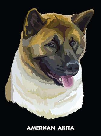 Colored portrait of American akita isolated vector illustration on black background Illusztráció