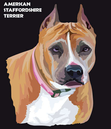 Colored portrait of American Staffordshire Terrier isolated vector illustration on black background