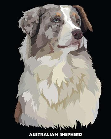 Colored portrait of Australian shepherd isolated vector illustration on black background Illustration